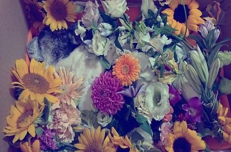 お花にかこまれて寝ているみたい.jpg