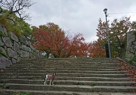 城跡の階段.jpg