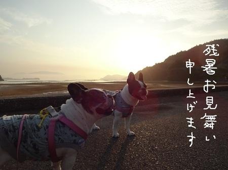 夏のごあいさつ2016.jpg