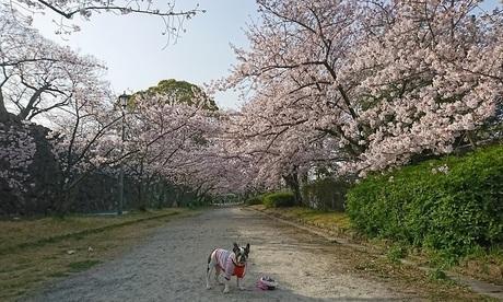 桜のアーチで.jpg