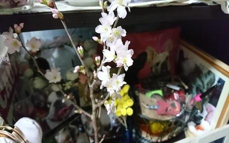 桜の枝を.jpg